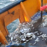 Commercial discards would feed 2 million
