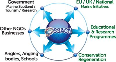 diagram of ssacn'#s approach
